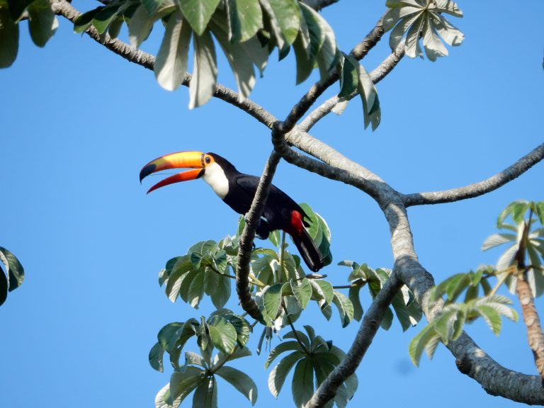 Br_Pantanal_113_klein